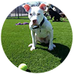 pet friendly grass artificial turf